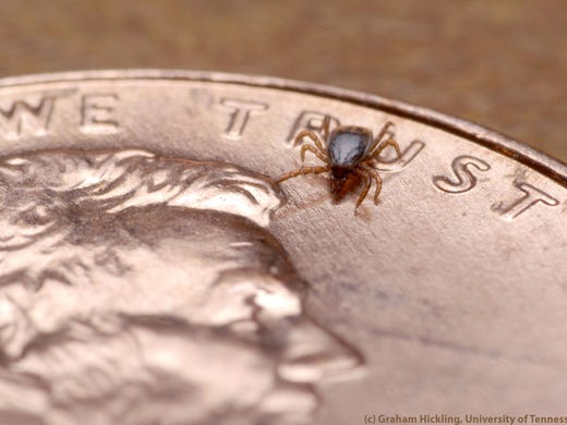 Graham Hickling, University of Tennessee via CDC Ticks,
