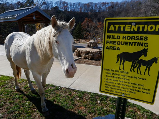 A wild horse stands near a sign warning of wild horses frequenting the area at Echo Bluff State Park on Thursday, Nov. 16, 2017.