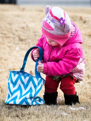 Katelyn Nash, 18 months-old, picks up her share of the 10,000 candy canes put out by the Henderson City Parks and Recreation Department for a Candy Cane Hunt at Atkinson Park Saturday, December 10, 2016.