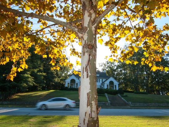 A car travels recently on West North Avenue by yellowing leaves in Linley Park in Anderson.