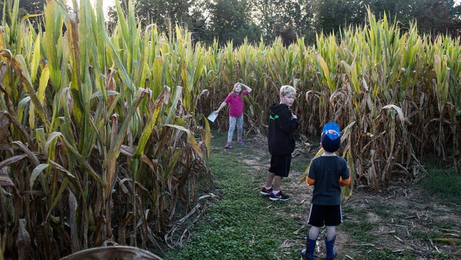 October 20, 2017 - From left, Alaina Hubbard, 7, Elijah Hubbard 9, and Brayden Hubbard, 4, make their way through the monster mystery corn maze at Jones Orchard.