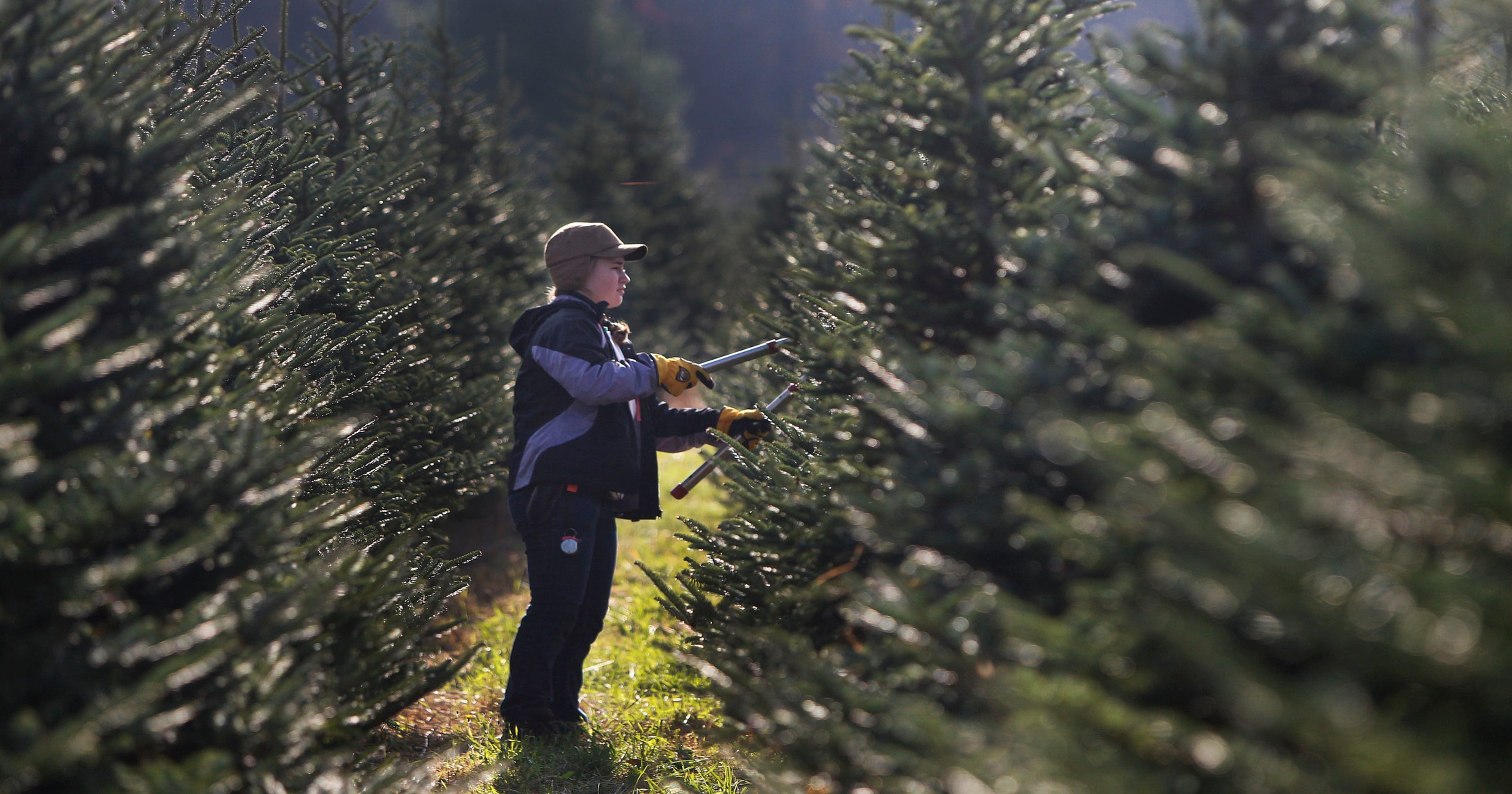 Christmas Tree Farms In Rochester Ny Area 2017 Hours And Extras