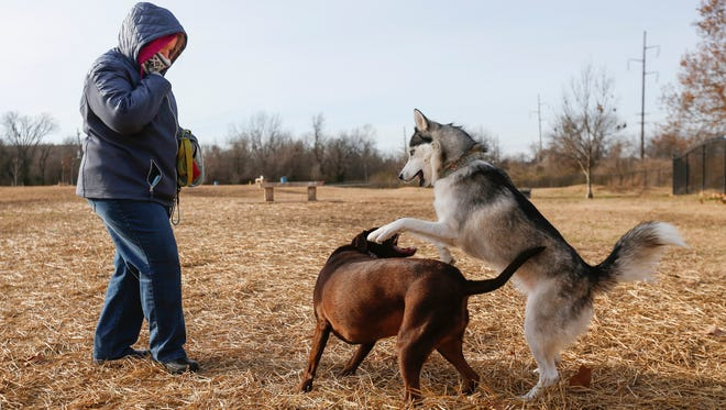 Jennifer Coleman watches as her dogs Belle, right, and Lady play at the Cruse Dog Park on Thursday, December 15, 2016.