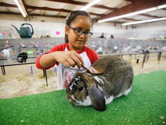 Tatum Latana cares for her rabbit during the 2015 San Juan County Fair.