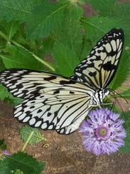 The logo of Anew Wellness of Somerset is the butterfly.