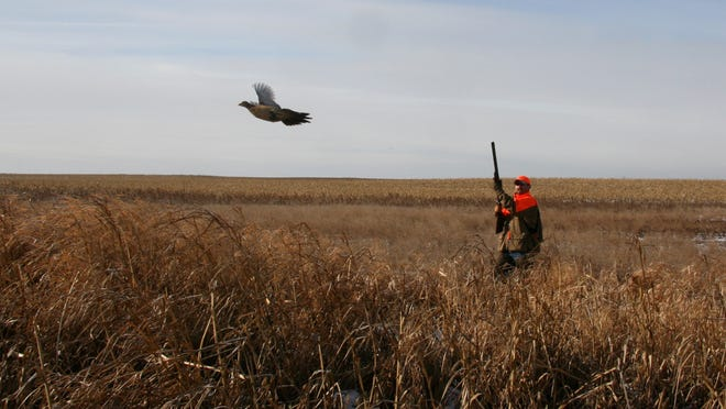 Pheasants Forever is looking at ways to reverse the recent decline in pheasants in South Dakota.