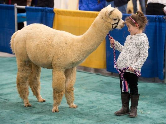 1-YDR-pmk-110816-alpacas