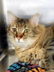 Sophie is a beautiful, 1½-year-old, spayed, female