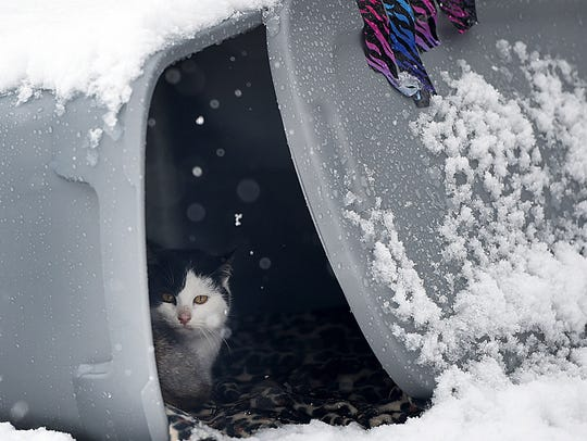 A cat stays out the snow in a make shift home for stray