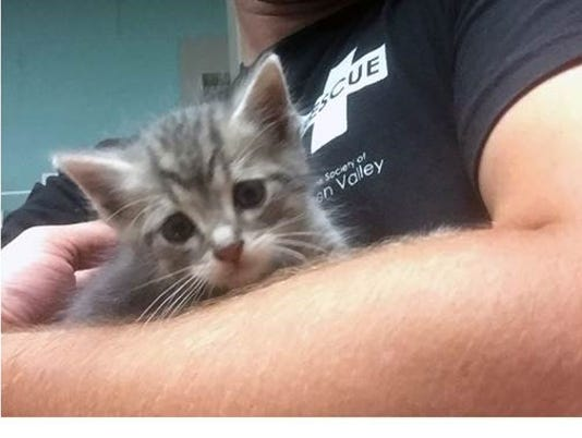 636366715460963381-kitty.jpg