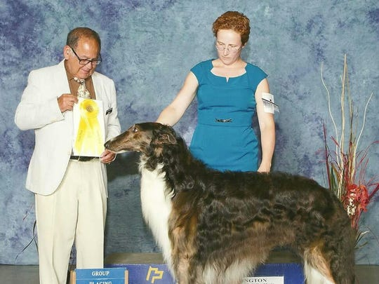 Kari McCloskey, of Peach Bottom Township, will be showing Duckie, a 4-year-old male Borzoi who lives in Thurmont, Maryland.