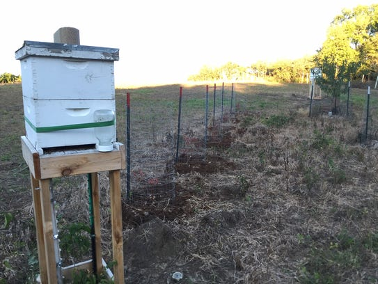W D M May Allow Backyard Beekeeping