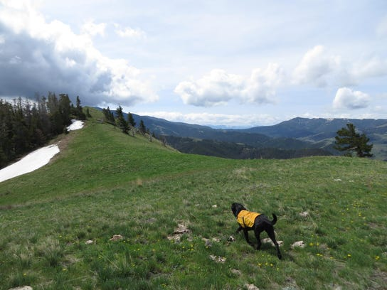 A dog traverses the area around Windy Mountain.