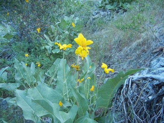 yellow flowers1.JPG