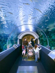 At Discovery World, you can walk through an aquarium.