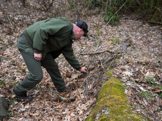 Dan Bryson, also part of the GSMNP staff fighting invasives, pulls garlic mustard out of the ground near the Chimney Tops trailhead on Monday, March 20, 2017.