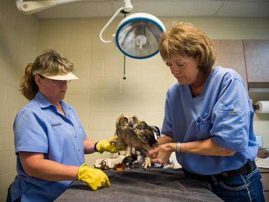 Veterinarian Cindy Backus, right, treats an injured