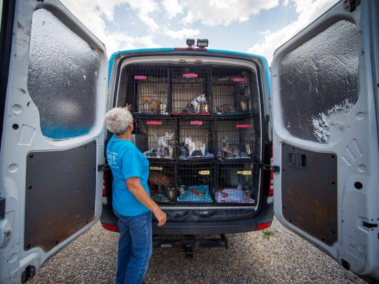 Blount County Animal Shelter volunteer Mary Lou Roberts checks in on the kittens already loaded in the van on Friday, July 14, 2017.