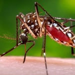 Mosquito company brings jobs to MS to fight Zika