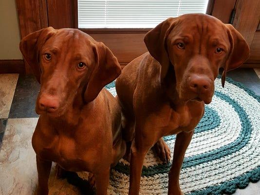 LDN-JML-120516-stolen-dogs-1.jpg