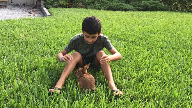 Manoa, 9,plays with Finn, his American breed rabbit. Finn ran back into the family's home Sunday and was thought lost in a fire that destroyed the home. His mother, Maryam Nabavi, found Finn alive the next day in the rubble left by the fire.