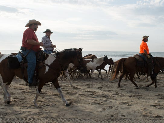 Saltwater Cowboys lead a herd of ponies along the beach