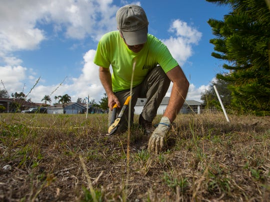 Greg Borchardt, a volunteer with the Cape Coral Friends of Wildlife and member of the Burrow Patrol, clears out overgrowth and debris from an owl burrow in Cape Coral Wednesday morning. The Burrow Patrol checks out the conditions of known burrows and help make sure the debris doesn't clog the burrow entrance or tunnels.