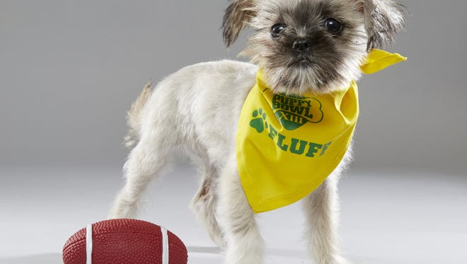 "Wilma, formerly of New Life Animal Rescue in Marlton, will ""compete"" for Team Fluff in Puppy Bowl XIII."