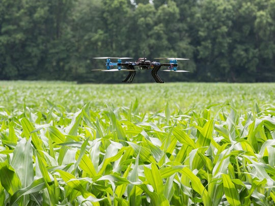 A UMES drone used for thermal imaging hovers over a cornfield at UMES during a demonstration on Thursday.
