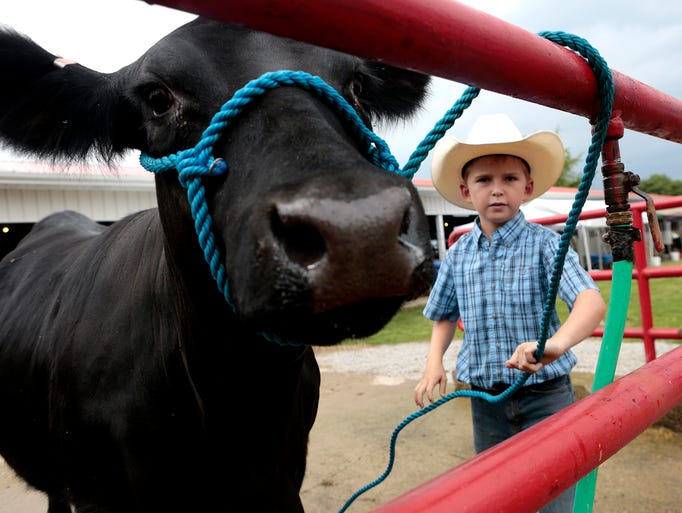 Jake Justice, 9, ties his heifer up so he can wash her before taking her into the barn. Justice is showing beef heifers with his sister at the Hartford Fair this week.