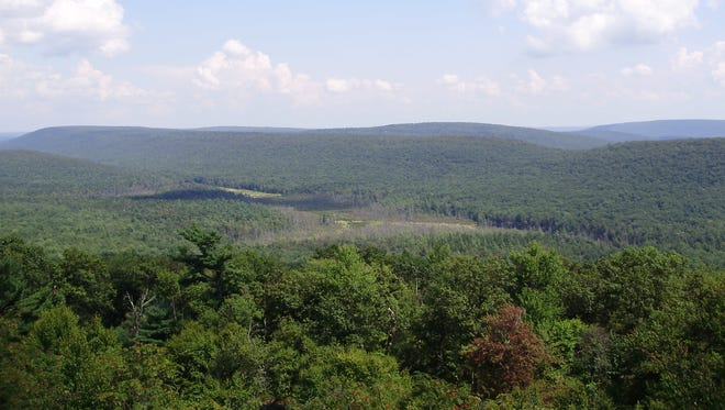 A trail-side view of Rothrock State Forest in central Pennsylvania. (Public domain photo by Famartin, via Wikimedia Creative Commons.)