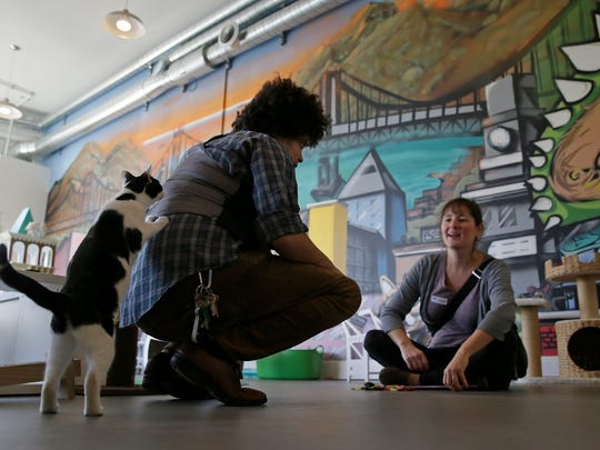 Pouncing on similar cafe concepts in Asia and Europe, Cat Town Cafe in northern California was America's first permanent feline-friendly coffee shop. Cafe customers pay to pet cute kitties while sipping on tea or espresso drinks. Similar cafes are planned to opening across the country, including Washington, D.C.