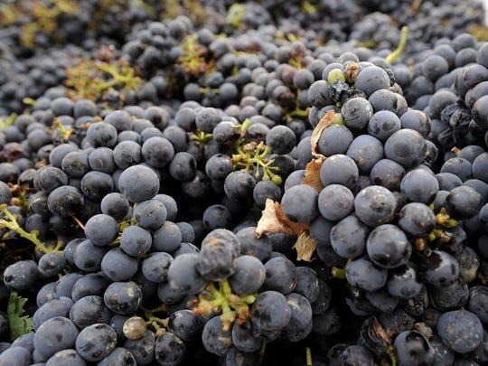 ARN-gen-Wine-Grapes.jpg