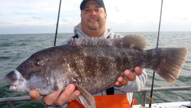 File: Jose Reyes caught this 7-pound blackfish on the Ocean Explorer out of Belmar NJ.
