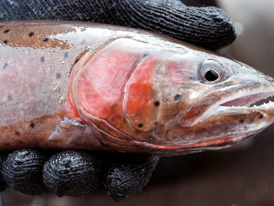STG0610 dvt trout return nevada.jpg