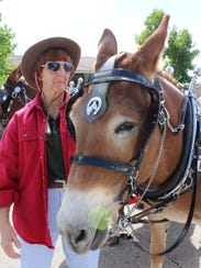 Mule-drawn carriage rides are popular with families