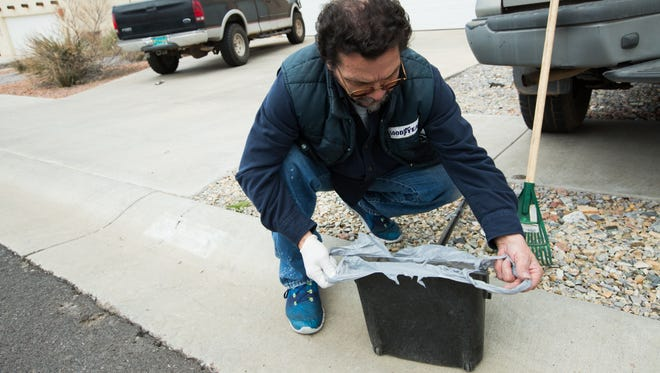 Henry Maestas, owner and operator of a dog waste removal service, demonstrates how he prepares to collect dog waste when going into a client's back yard with grass or dirt. February 17, 2017.