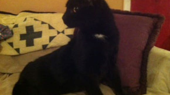 found-blackcat0223