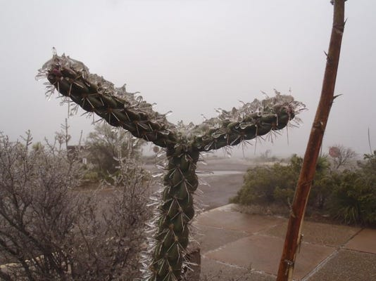 Frosted cactus.jpg