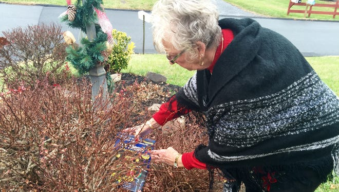 Mary Ann Hall places an empty box her Christmas lights came in among the thorny bushes growing in her front yard. Hall's lights were stolen on Sunday and she is giving the thief the packaging to take too.