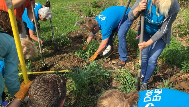 Duke Energy volunteers pitched in with other volunteers to transplant native savannah grasses from the front of Cary Home to the back.