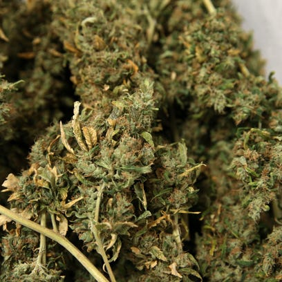 Dried marijuana flower ready to be turned in to product