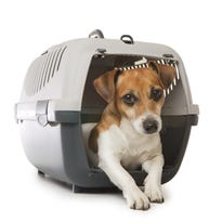 More than 2 million pets and animals are flown by the nation's carriers each year.
