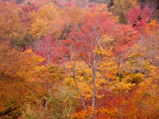 Fall foliage is seen in full force during the Vermont high school boys golf state championships on Wednesday at Green Mountain National Golf Course in Killington.