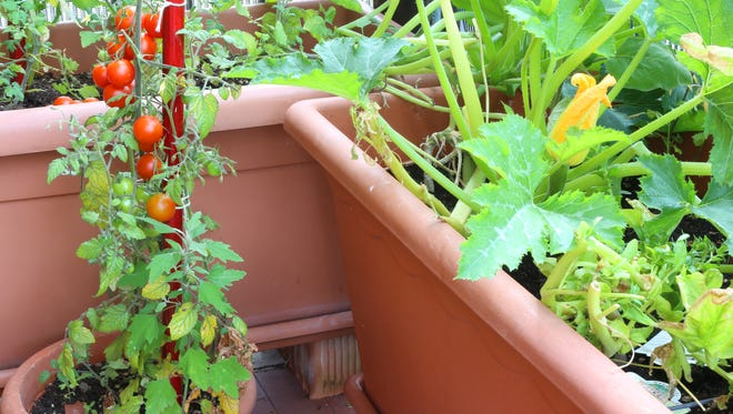 Tomatoes will do well growing in containers on a deck or patio.