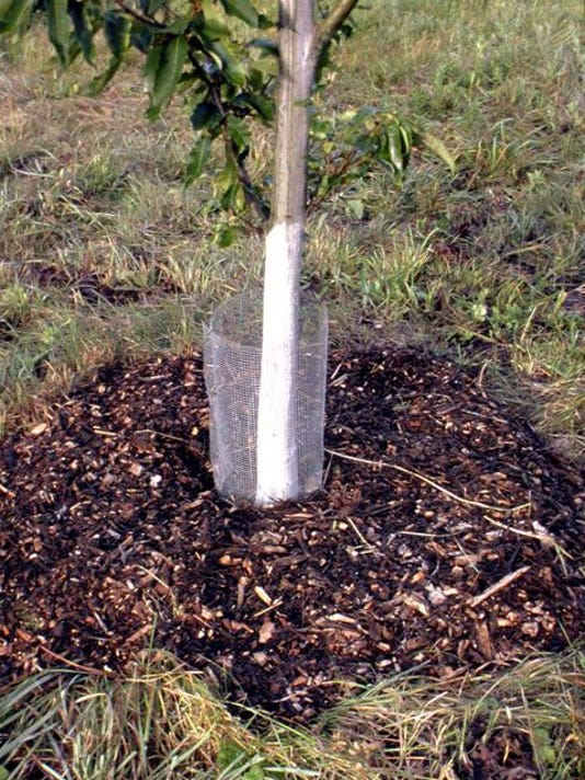 Gardening-Readying Trees for Winter