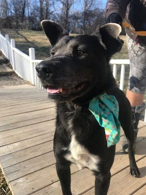 Corey is a 4-year-old black Lab mix who is always smiling.