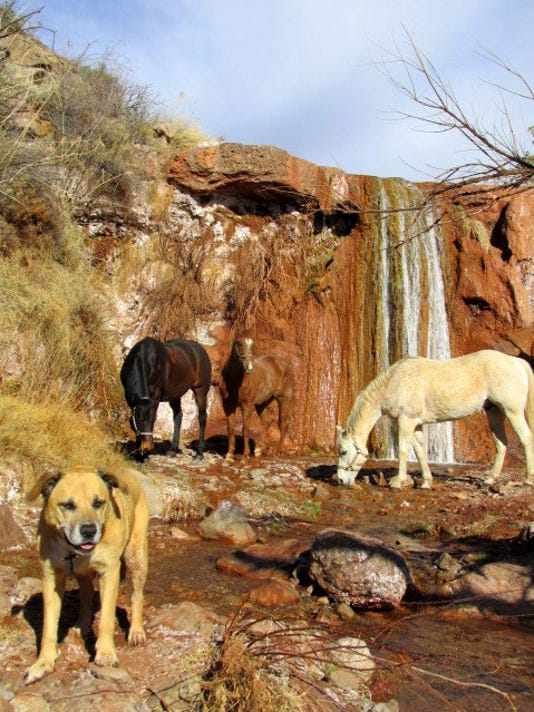 Mathhew Midgetts horses and Lula by waterfall