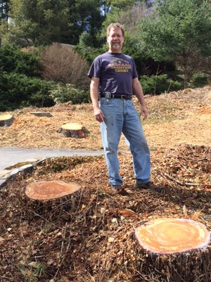 Todd Speidell initially was fined $3,400 for felling trees without a city permit, but the fine was dropped after he proved the trees were diseased.