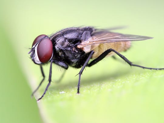 Flies are dirty, dirty bugs.